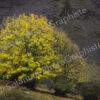 Solanum l'automne la saison aux couleurs chaudes