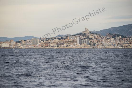 Solanum La bonne Mere Marseille