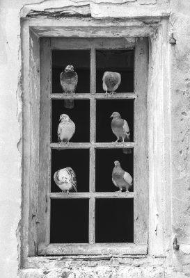 Au hasard d'une balade cette belle fenêtre et ce pigeons tranquillement posés