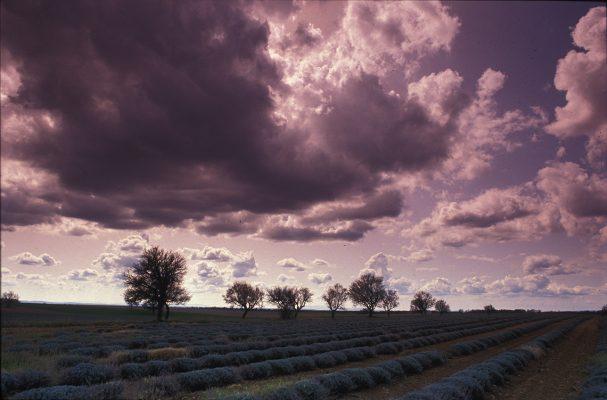 Plateau de Valensole Lavandes de Provence